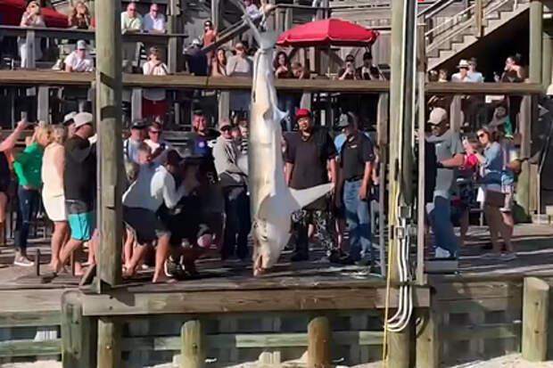 Подросток поймал акулу больше него самого и решил ее съесть