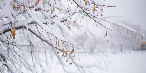 История Лианозовского парка началась в XVI веке – администрация ПКиО