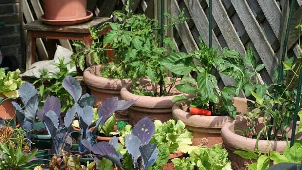 Пермакультура: как обустроить огород так, чтобы он рос сам по себе