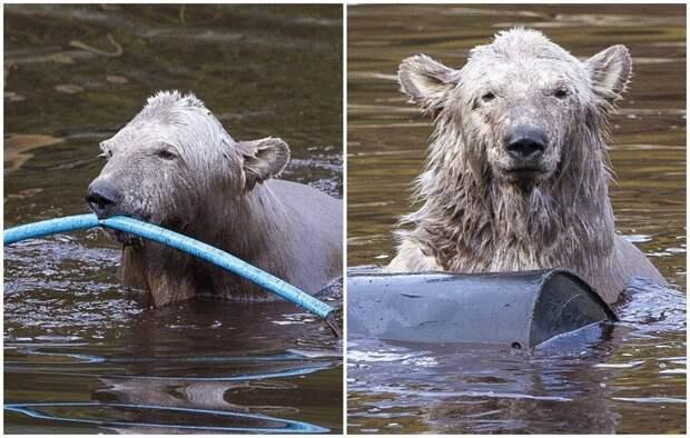 Развлечения белого медвежонка