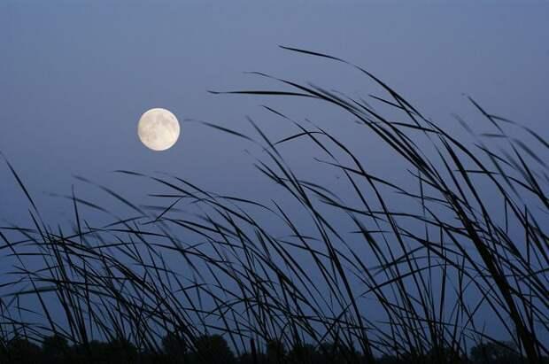 Лунный календарь садовода и огородника с 6 по 21 сентября