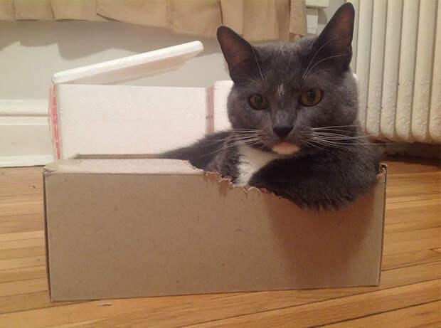 А этот кот мастерски выгрыз место под лапу животные, забавно, котопост, коты, кошки, неожиданно, питомцы, юмор