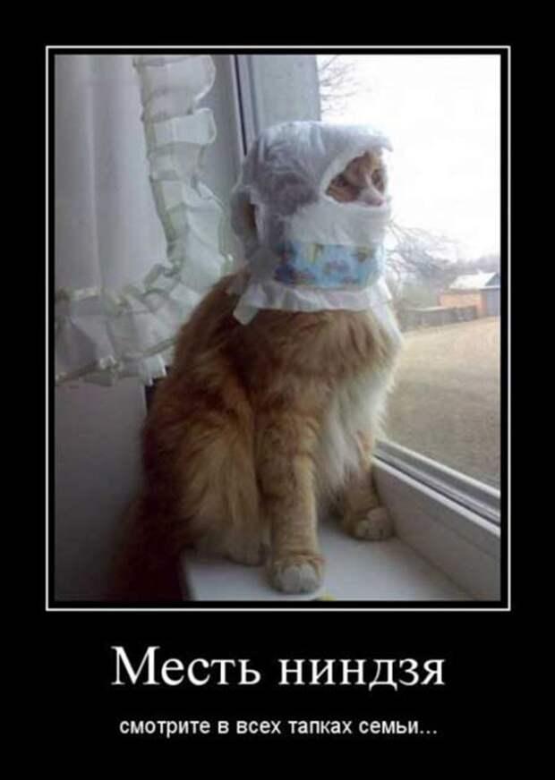 О котиках домашних… Забавные истории и фото, полные эмоций)