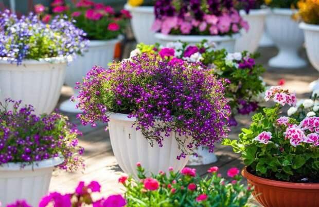 Цветы. Фото: mos.ru