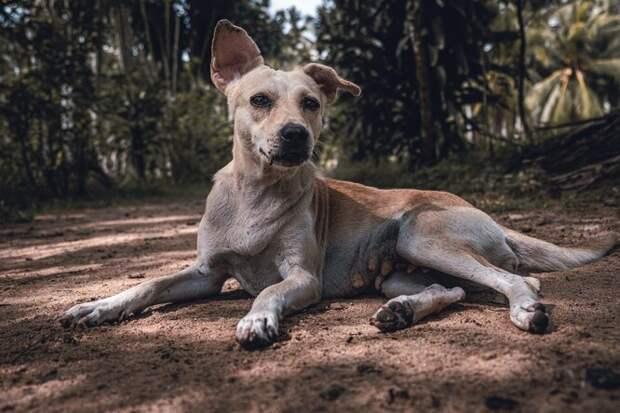 Бездомная собака непозволяла притронуться ксебе, но забота растопила её сердце