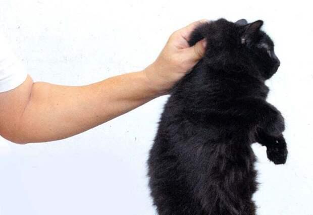 Взятие кота за шкрирку