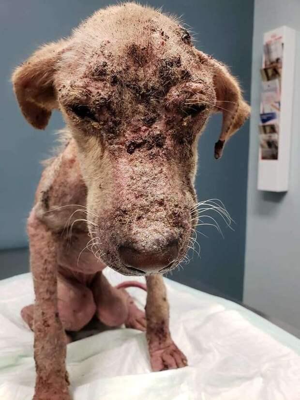Облезлая худая собака бродила по округе… Ей хотели помочь, но врачи сказали, что она не выживет!