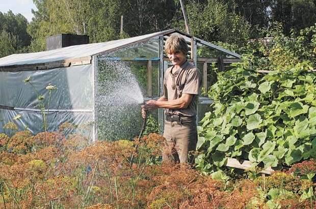 Эксперты объяснили, как спасти сад и огород во время засухи