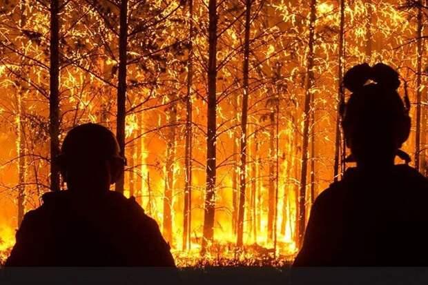 Сибирские пожары и борьба с огненной стихией словом и делом