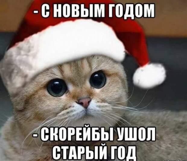 Приколы и мемы про Новый год