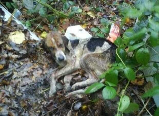 Женщина нашла в куче мусора еле-живое существо...