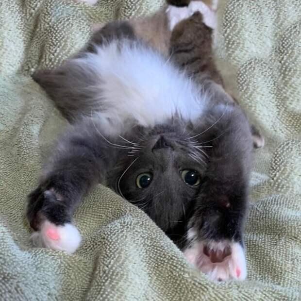 Страдающей от неизлечимой болезни, милой кошке, повезло обрести семью