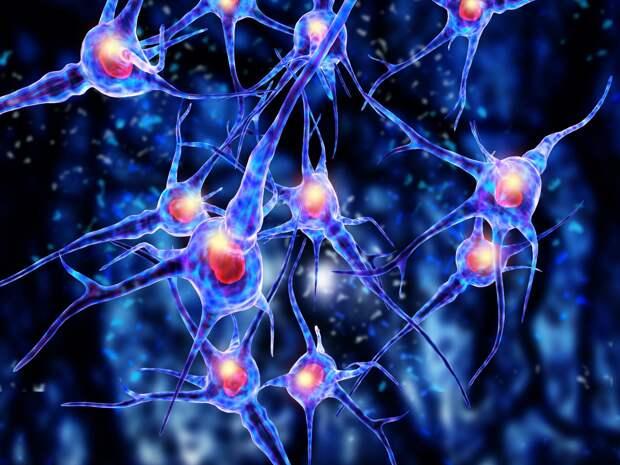 Ученые из Германии выявили механизм движения клеток в человеческом организме