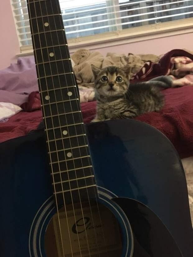 Спасенный котенок привык засыпать под игру на гитаре