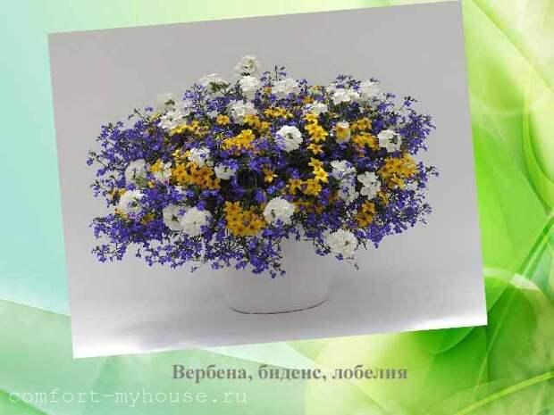 kompozicija iz cvetov v kashpo