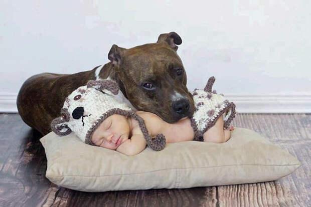 дети должны расти с домашними животными (12)