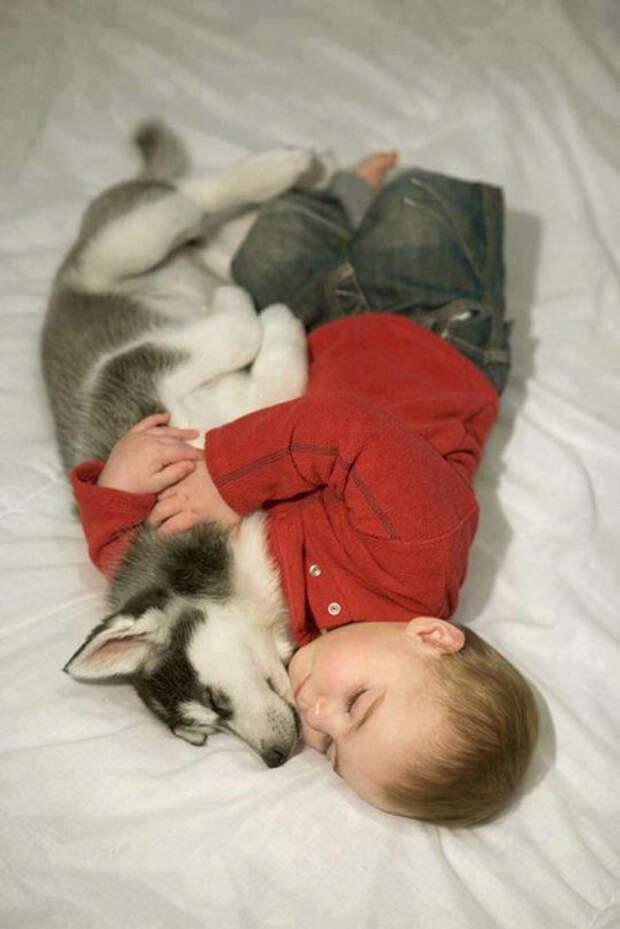дети должны расти с домашними животными (3)