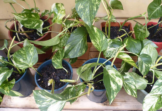 10 домашних растений, которые снабдят вас бесплатным кислородом
