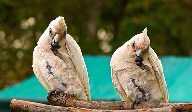 Животные-близнецы - 25 очаровательных фото-209