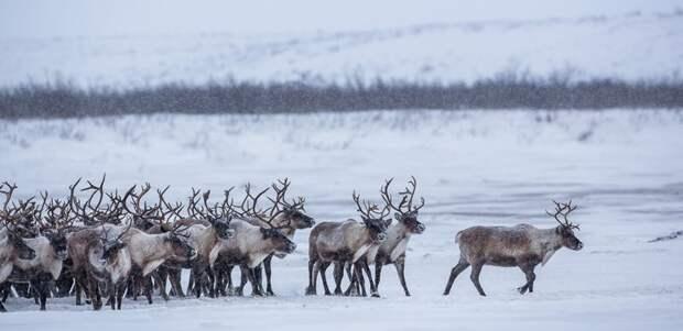 tundra_03-800x389