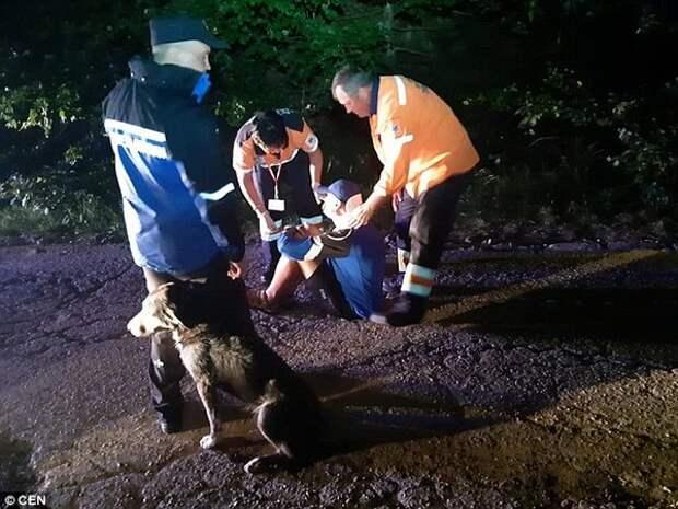 Бродячая собака спасает жизнь травмированного велосипедиста, согревая своим телом