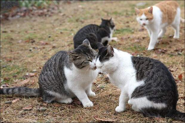 Любовь по-кошачьи, как у людей прям