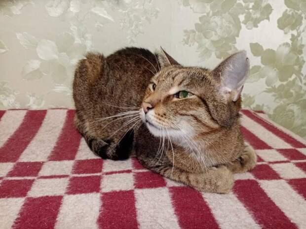 Кот, который ждал своего человека вприюте целых семь лет