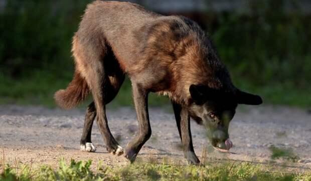 До 2 октября в поселении Кленовое и ТиНАО объявлен карантин по бешенству животных