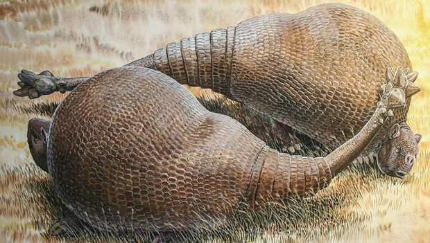 Дедикурус: Бронированная кавалерия с булавой на хвосте Дедикурус, Палеонтология, Животные, Броненосец, Дикие животные, Природа, Книга животных, Длиннопост
