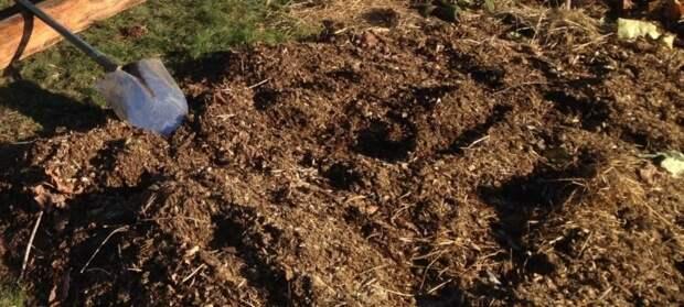 3 удобрения, про которые надо забыть при посадке чеснока осенью