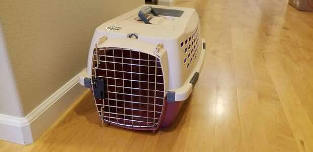Пара взяла из приюта котенка, но дома они увидели в переноске неожиданное дополнение