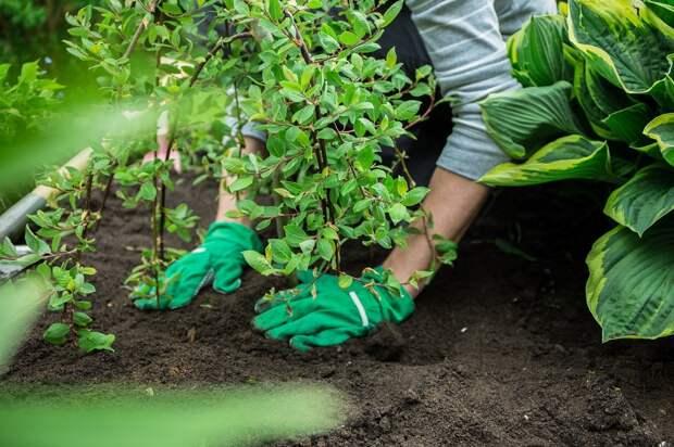 Семь наиболее частых ошибок при посадке растений