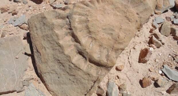 В Чили обнаружена крылатая ящерица Юрского периода с размахом крыльев до 2-х метров
