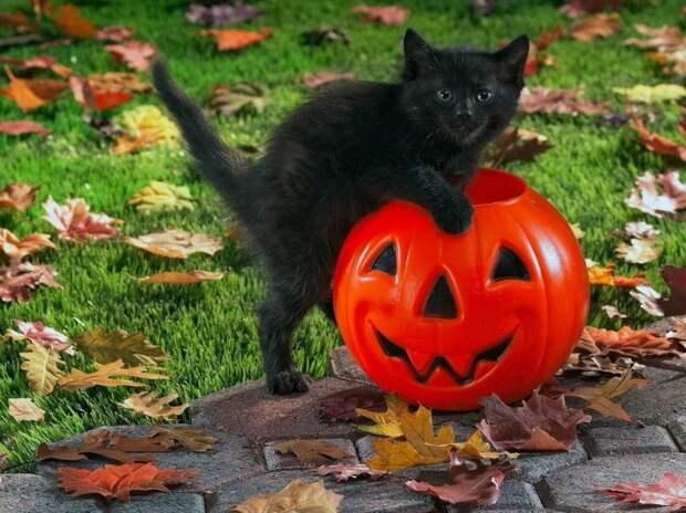 Животные уже начали отмечать Хэллоуин :)) 20 фото