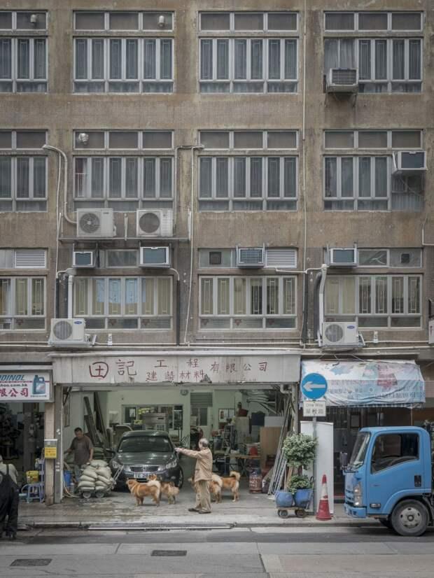 Трогательные фотографии собак в гаражах Гонконга