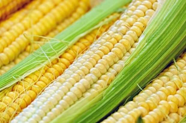 Готовить кукурузу можно, не очищая от листьев.
