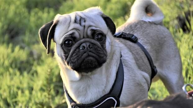 Адвокат Ермолаева перечислила случаи, когда выгул собак в городе запрещен