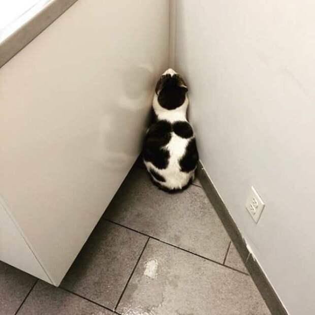Котики — мастера пряток