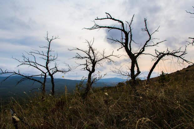 На фото: мёртвый лес на горе Агармыш.