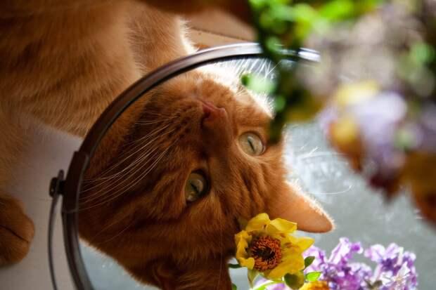 5 способов, как сделать кошку счастливой