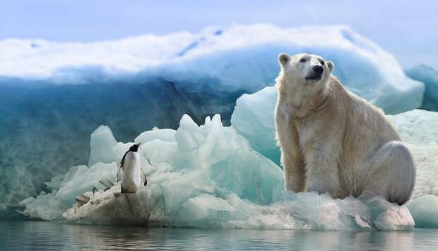 Арктический квест пройдёт в Хорошёво-Мнёвниках