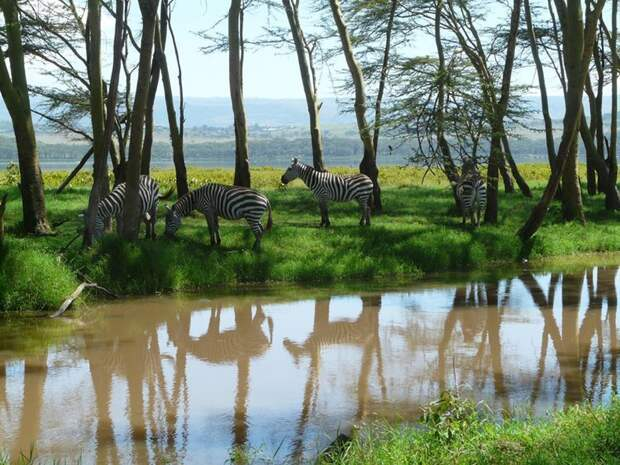 1. Национальный парк Озеро Накуру (Кения) заповедник, заповедники, национальные парки, национальный парк, парки, познавательно, страны мира, туристу на заметку