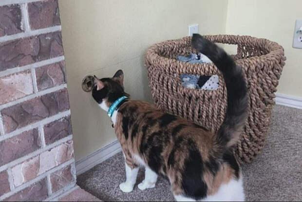 В США кошка из приюта помогла семье избежать страшного взрыва