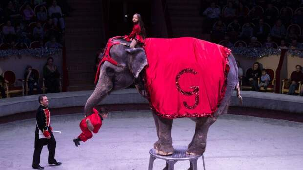 Эдгар Запашный объяснил, почему слонам лучше живется в зоопарке или цирке