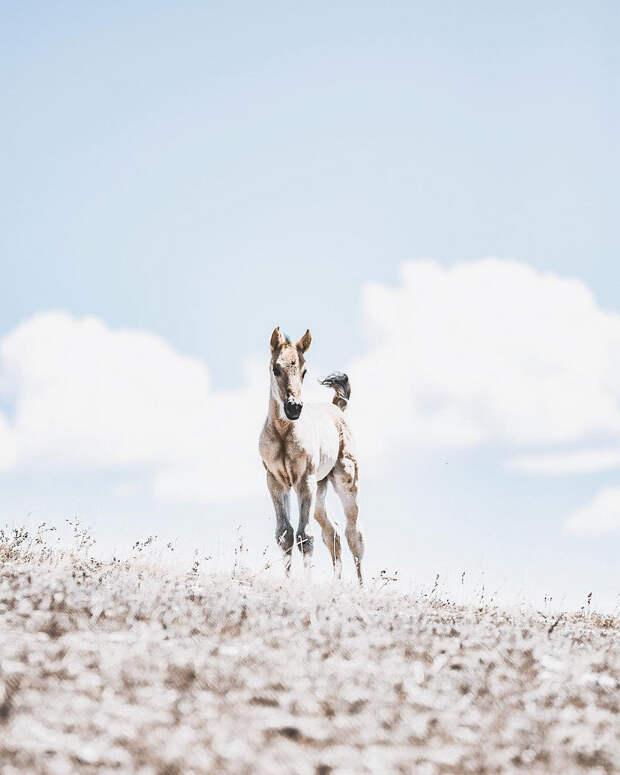 Когда дикая природа вызывает восторг. Фотограф Донал Бойд 69