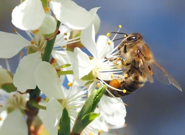Прокурорская проверка по факту массовой гибели пчёл начата в Удмуртии
