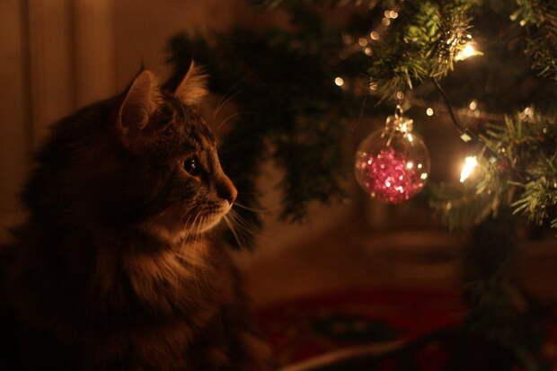 3166706_Christmas_cat_by_whatskunk (700x466, 45Kb)