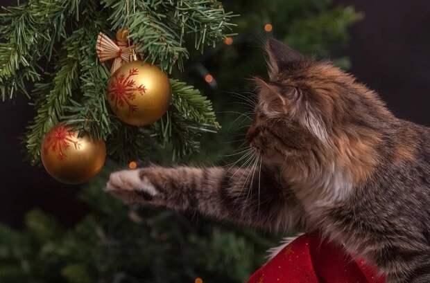 Законопроект об объявлении 31 декабря праздничным днем внесли в Госдуму