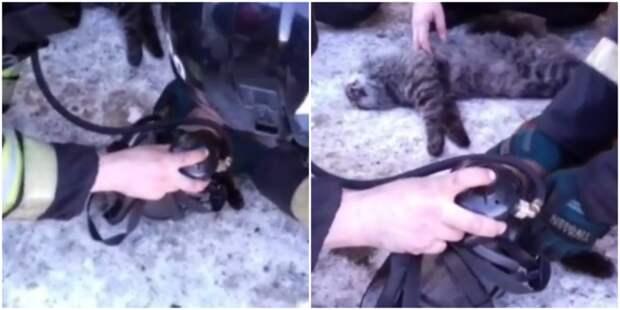 В Магадане пожарные откачали спасённых из горящей квартиры кошек видео, животные, коты, магадан, пожар, пожарные, реанимация, спасение