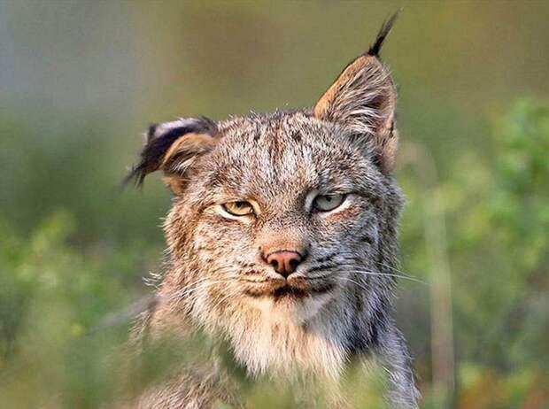 Животные после праздников... животные, праздники, фото
